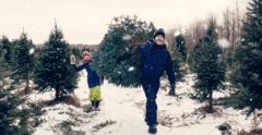 Cut Christmas Tree Vancouver